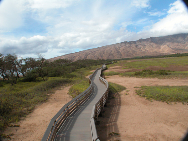 Free things to do on Maui - Bird watching at KealiaPond National Wildlife Refuge