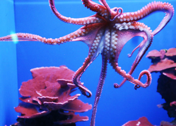 Maui Ocean Center: Things to do in Maui